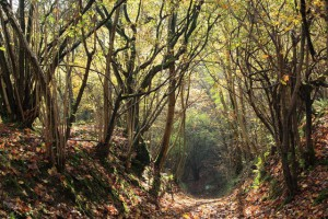 Gopher Wood & the Pewsey Downs Walk and Bridleway