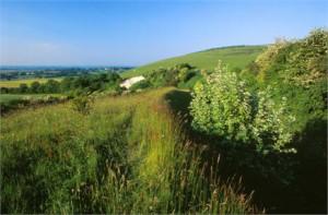 Ham Hill Nature Reserve