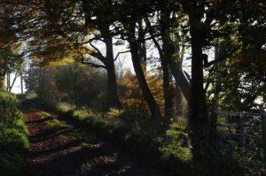 Views of Wiltshire