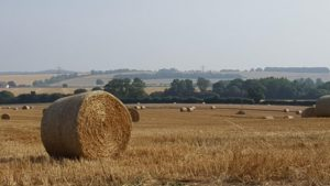 Bales at harvest