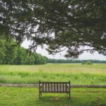 Bench at St Katharine's in Savernake
