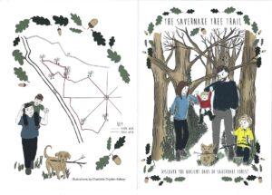 The Savernake Tree Trail